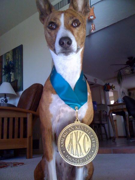 Basenji AKC Medallion