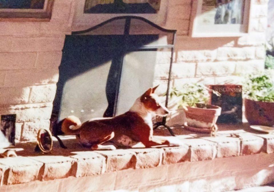 Sage sunbathing