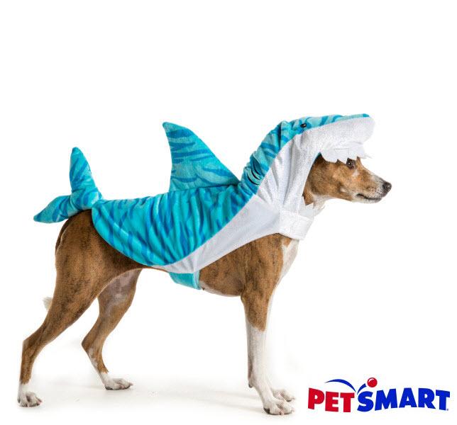 V Halloween 2016 Petsmart